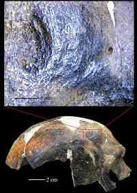 Noticias Criminología. Preubas de agresiones entre humanos de hace 126000 años. Marisol Collazos Soto