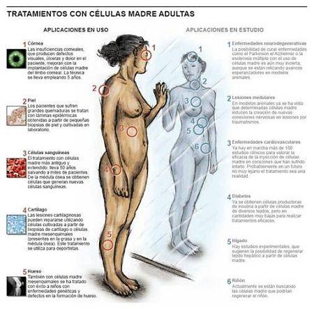 Noticias criminología. Nobel de Medicina a los reprogramadores de la vida. Marisol Collazos Soto