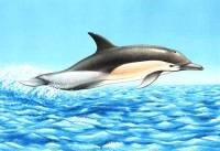 Noticias criminología. La Terapia Asistida por Delfines no tiene evidencia científica. Marisol Collazos Soto