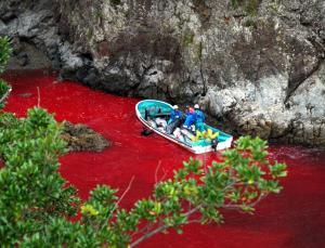 Noticias criminología. Un nuevo método japonés para matar delfines es inhumano. Marisol Collazos Soto