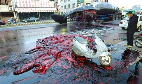 Noticias Criminología. Explosión de cadáveres. Marisol Collazos Soto