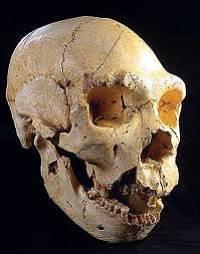 Noticias criminología. El 'Homo antecessor' se comía a niños de otros grupos para defender el territorio . Marisol Collazos Soto