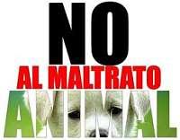 Noticias Criminología. Justicias contra animales. Marisol Soto