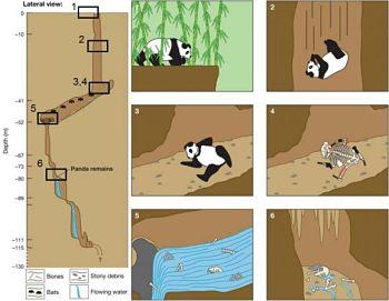 Noticias criminología. La tafonomía forense de la muerte de un panda descuidado. Marisol Collazos Soto