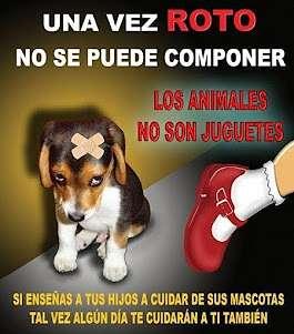 Noticias Criminología. Los animales no son un juguete. Marisol COLLAZOS Soto