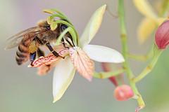Noticias criminología. Explicación del misterio de la desaparición de abejas. Marisol Collazos Soto