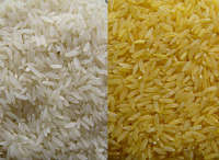 Actualidad Informática. Cáscara de arroz para fabricar baterías de Smartphone. Rafael Barzanallana. UMU