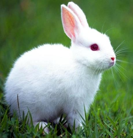 Toca Comer. Nueva reglamentación conejos... Marisol Collazos Soto
